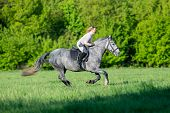 Horseback riding. Woman riding a horse in summertime outdoors. Human on horse runs fast in field. Ho poster
