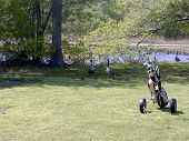 Golfing Geese
