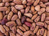 Bean Pinto