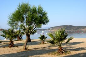 stock photo of gumbet  - Sea and palms - JPG