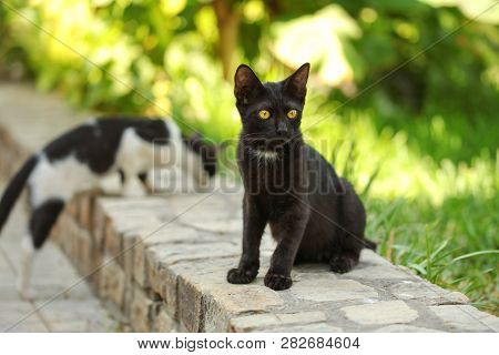 Stray Black Cat Sitting On