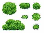Set Of Green Bush And Tree Crown Of Different Shapes. Ornamental Plant Shrub For Decorate Of A Park, poster