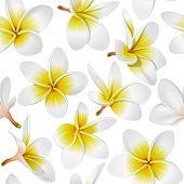Frangipani (Plumeria) tropical flowers. Seamless pattern background. Vector illustration