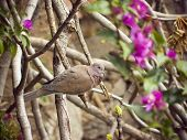 Turtledove Between Flowers And Leafs On A Branch