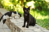 Stray Black Cat Sitting On Pavement Curb, Another One In Background, Blurred Sun Lit Green Harden Be poster