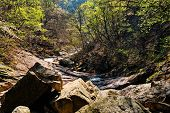 Stream in forest in Seoraksan National Park, South Korea poster