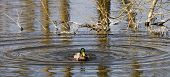 Duck Tidy Up