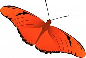 Julia Butterfly Vector