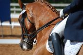 Dressage Rider In Competition