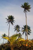 Tropical Palm Grove On A Carribean Island