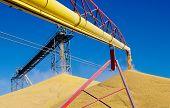 Descarregamento de milho