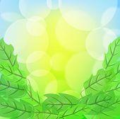 Fundo verde Primavera, com folhagem e luz embaçada