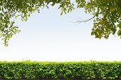 Shrubs Fence On Blue Sky Background