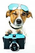 stock photo of eye-wink  - dog photo camera winking with left eye - JPG
