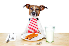 foto of table manners  - dinner meal at table dog hungry to start eating - JPG
