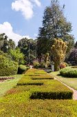 stock photo of royal botanic gardens  - Alley with hedge in Royal Botanical Gardens Peradeniya - JPG