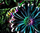 Colorful Gerbera Daisy Illustration