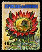 Republic Of Burundi - Circa 1974: A Stamp Printed In Republic Of Burundi Shows Protea Cynaroides, Se