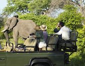 stock photo of safari hat  - Side view of a group of tourists on safari watching elephant - JPG
