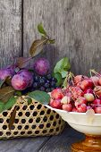 Wild Apples, Plums And Berries Aronia