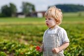 image of strawberry blonde  - Little child on organic strawberry farm in summer picking berries - JPG
