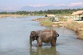 Chitwan elefante - Nepal