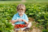 stock photo of strawberry blonde  - Little toddler boy on organic strawberry farm in summer picking berries - JPG