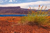 foto of potash  - Wild Flowers near Evaporation Pools with La Sale Mountains in the Back against beautiful blue sky  - JPG