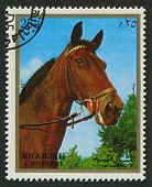 EMIRATE OF SHARJAH - CIRCA 1972: A stamp printed in Emirate of Sharjah shows image of The horse (Equ