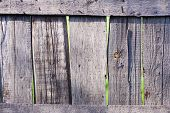 Old Shabby Wooden Fence. Rural Abstract Backgrounds