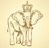Sketch Elephant In Crown, Vector Background