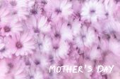 Mother's day greeting card, holiday greetings, gift for mommy, dreamy background of pink daisy flowe