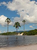 foto of canaima  - Waterfalls and palm trees in Canaima lagoon Venezuela - JPG