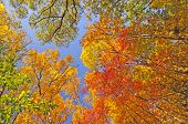 Falls Colors In  The Forest Canopy