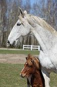 Big Horse With Pony Friend