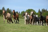 Very Various Batch Of Horses Running On Pasturage