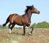 Amazing Horse Running On Spring Pasturage