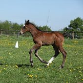 Beautiful Filly On Pasturage