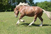 Gorgeous Horse Running On Flowered Pasturage
