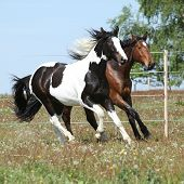 Two Amazing Horses Running Together
