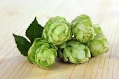 Fresh green hops, on wooden background