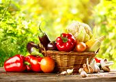 Vegetables. Fresh Bio Vegetable in a Basket. Over green blurred Nature Background. Organic vegetable