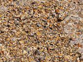 Muscheln und Schaum am Strand