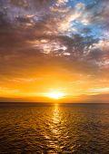 Idyllic Paradise Morning Glory