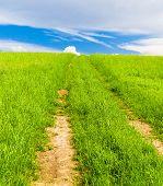 Fields of Sunlight Summer Lawn