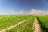Way Ahead Fields of Sunlight