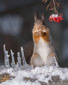 Squirrel In The Cold