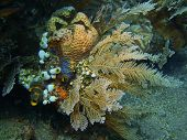 pic of squirt  - The surprising underwater world of the Bali basin - JPG