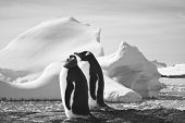 Two penguins dreaming sitting on a rock, glaciers in the background