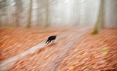 Abstract Background. Motion Blurred Running Dog In Autumnal Forest.
